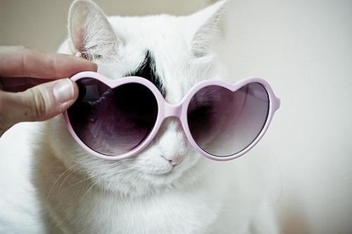 メガネ猫20