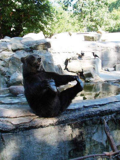 クマが釣られたり戦ったりあられもない格好したりする画像12