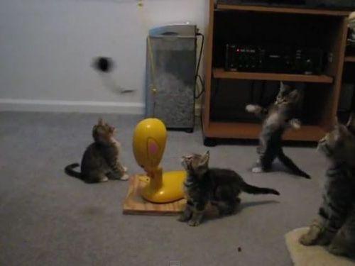 思うままに釣られる子猫たち05