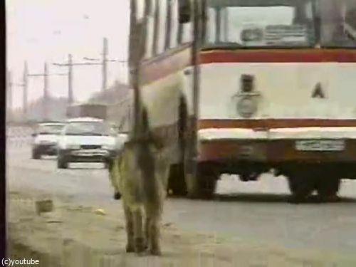 ロシア版の忠犬ハチ公04