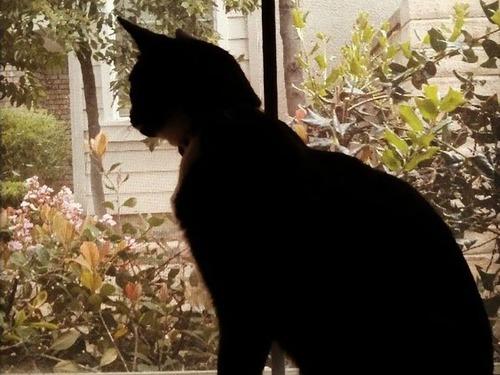 うちの猫が向かいの猫に恋をしていた