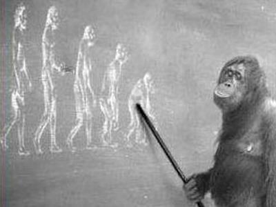 おもしろ進化00