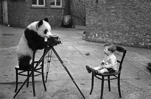 カメラマンな動物16