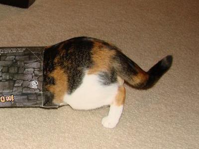 猫ホイホイ00