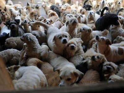 1500匹の犬と200匹の猫00