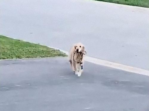 散歩が待ちきれない犬01