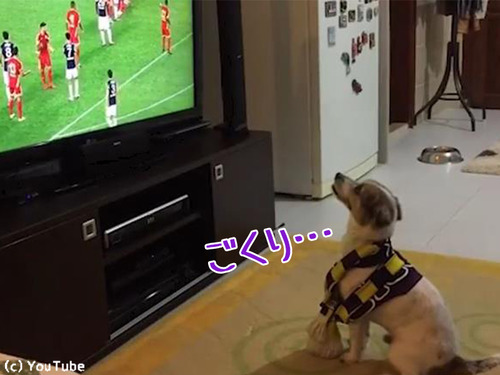 ゴールによろこぶ犬00