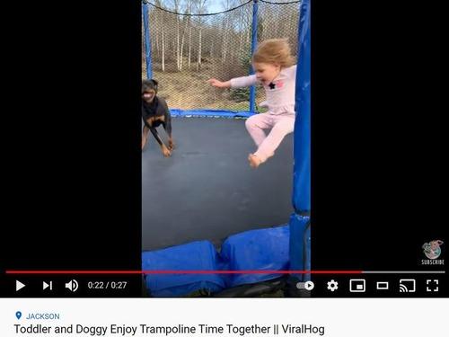 女の子と犬のトランポリン
