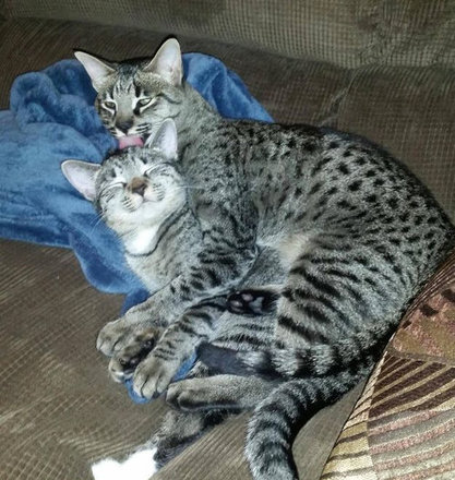 猫をぎゅーっとしたくなる写真11