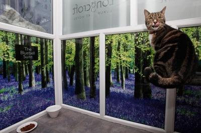 猫の高級ホテル06