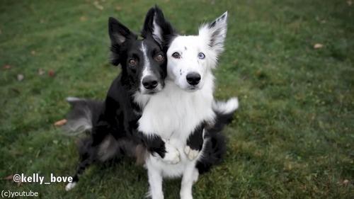 写真写りを気にする犬たち06