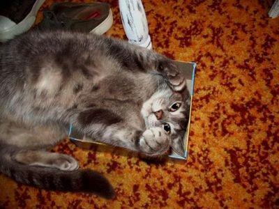 狭い所に入りたがる猫10