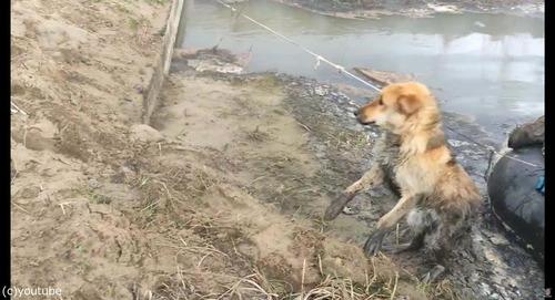 沼地にハマって動けない犬を救出06