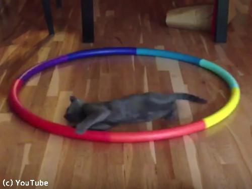猫フラフープ04