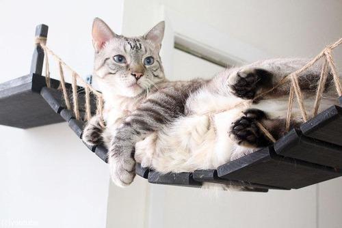 猫と吊り橋05