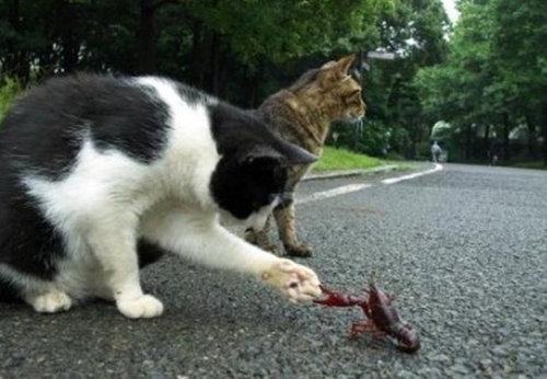 チャレンジャーな猫10