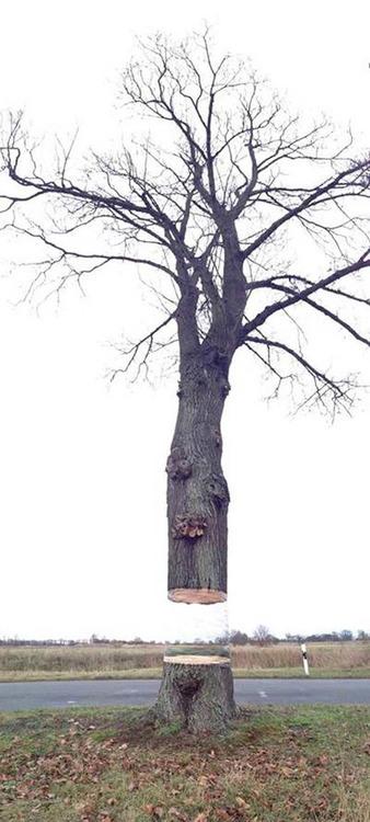 大木を宙に浮かべる方法04