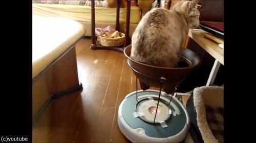 ルンバを乗りこなす猫11