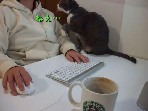 猫「ねえ、早く寝ようよー」00