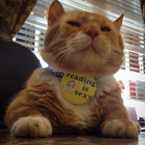 本屋の猫01