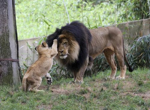 野生動物の親子26