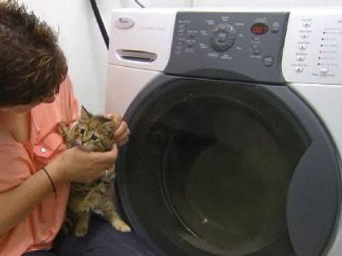 洗濯機の子猫00