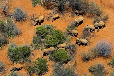 まるでゲーム画面のように真上から見下ろしたアフリカの写真12