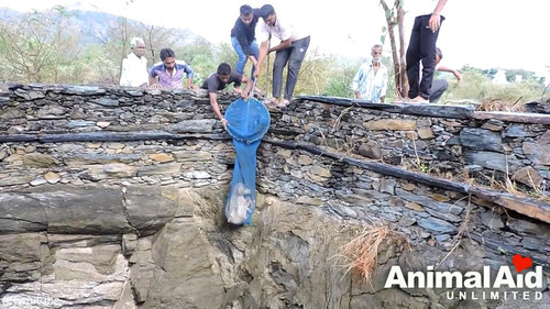 井戸に落ちた犬の救出劇09