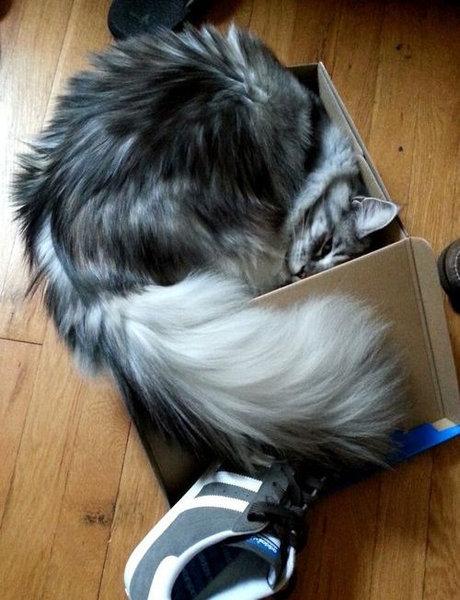 箱入り猫09