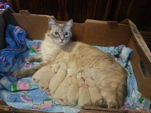 自慢の子猫たち21