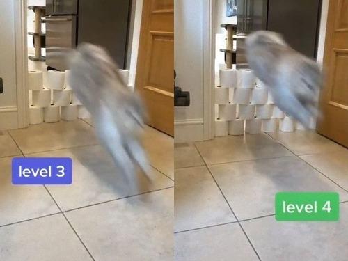 猫はトイレットペーパーを何段まで飛び越えられるのか01