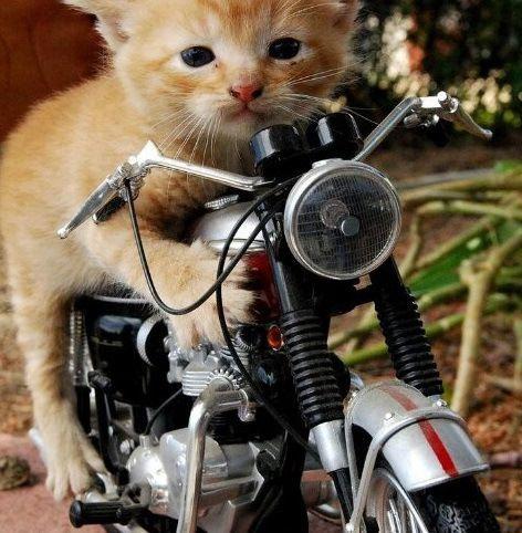 猫と乗り物01
