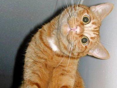 普段甘えてこない猫が頑固に離れず不思議な仕草…飼い主の肺ガン見つける:らばQ