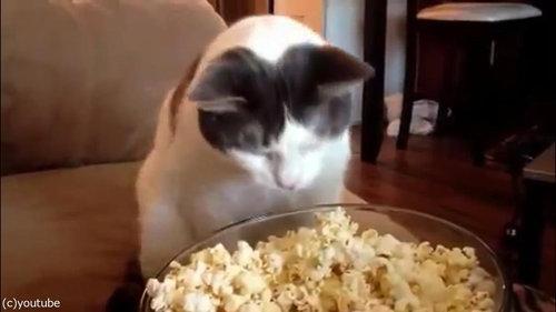 作りたてのポップコーンと猫02