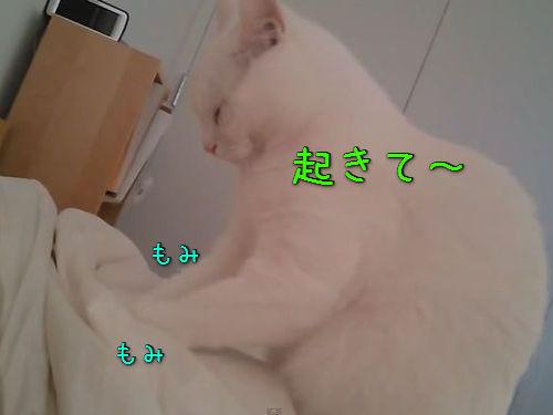 やさしく起こしてくれる猫00
