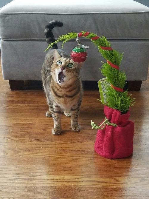 演技力の高い猫たち05