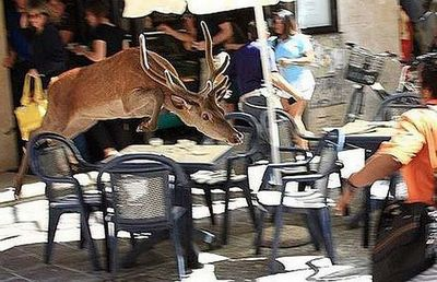 街中に現れた動物たち02