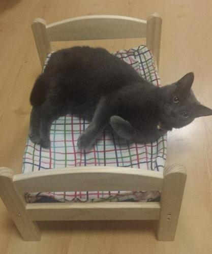 猫ベッド02