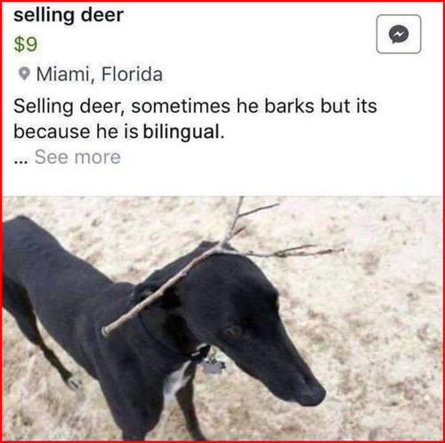 「鹿を売ります」01