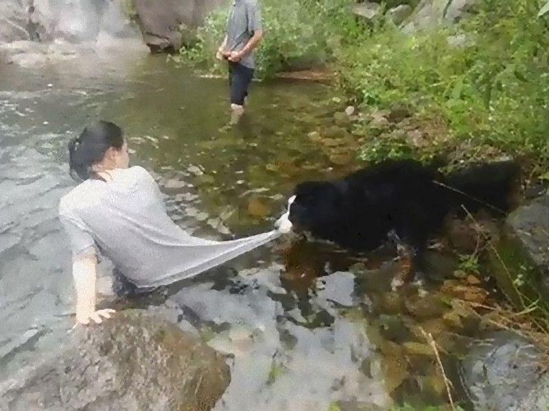 「どうしよう、犬が川遊びをさせてくれないの…