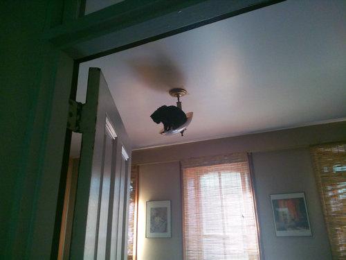 どこでも登れる猫01