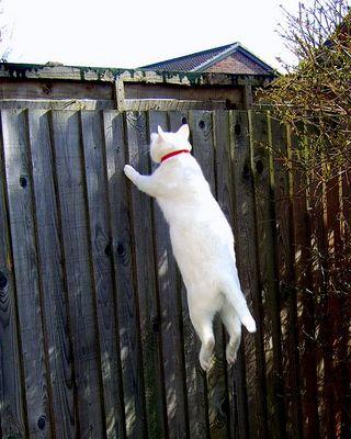 猫ジャンプ09
