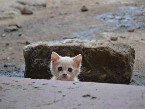 ケニアで子猫00