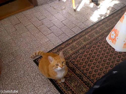 甘えてくる猫03