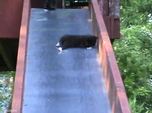 滑り台を落ちる子猫を助ける親猫…まさかのオチ01