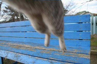 猫が飛びかかってきた01
