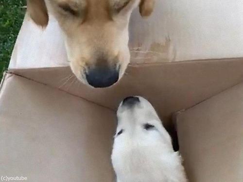 子犬と出会ったお兄ちゃん犬