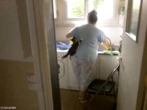 洗い物と子猫03