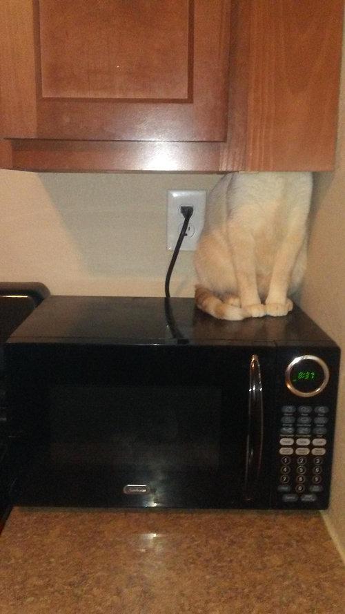 引っ越しと猫01