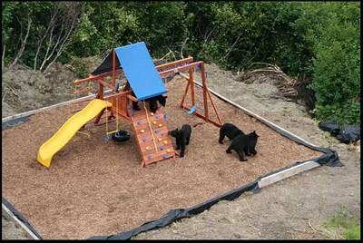 庭に遊び場を作ったら…クマさんが…喜んで遊んでた02